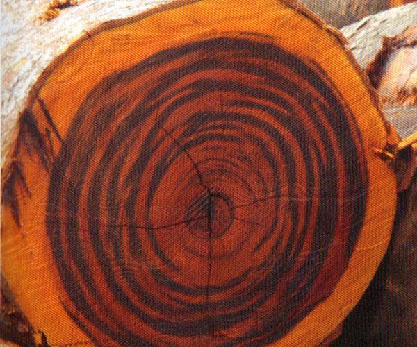 Tiger Wood Decking Emmer Brothers Cedar